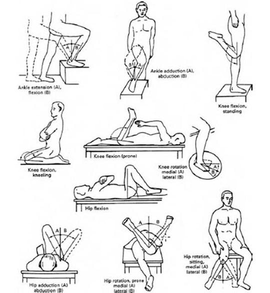 Body movement anatomy