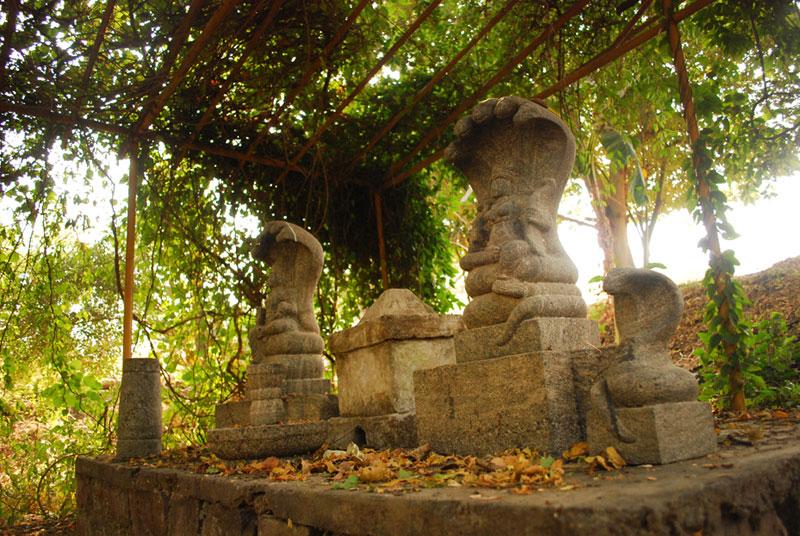 D Source Kaavu Sacred Grove Of Kerala Sacred Groves