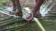 Coconut Palm Leaf Craft - Loutolim, Goa